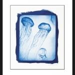 jellyfish-cyanotype